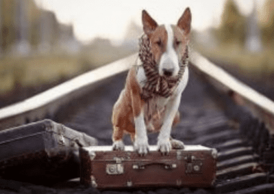 Atelier chien & voyage